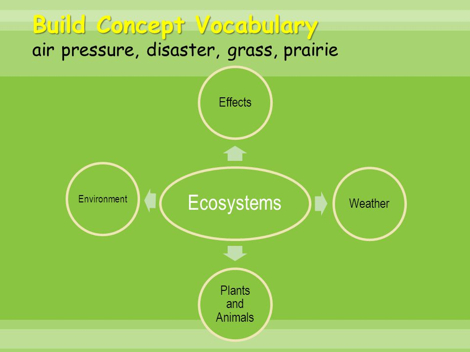 Build Concept Vocabulary air pressure, disaster, grass, prairie