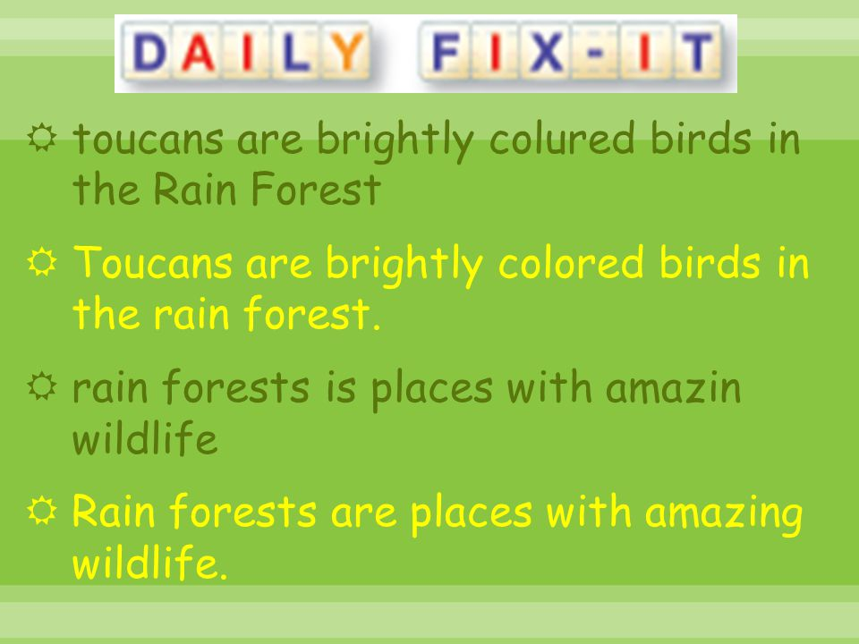 toucans are brightly colured birds in the Rain Forest