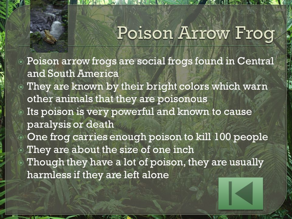 Poison Arrow Frog Poison arrow frogs are social frogs found in Central and South America.