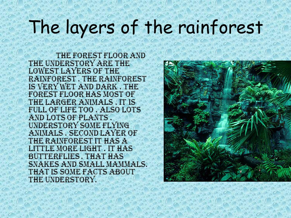 The layers of the rainforest