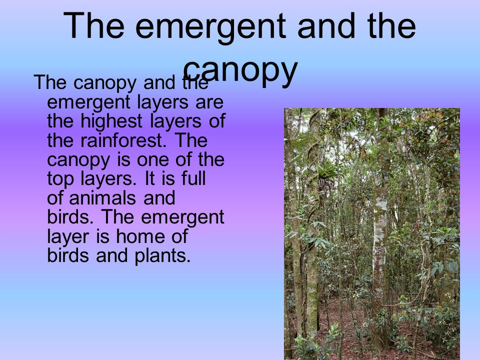 The emergent and the canopy