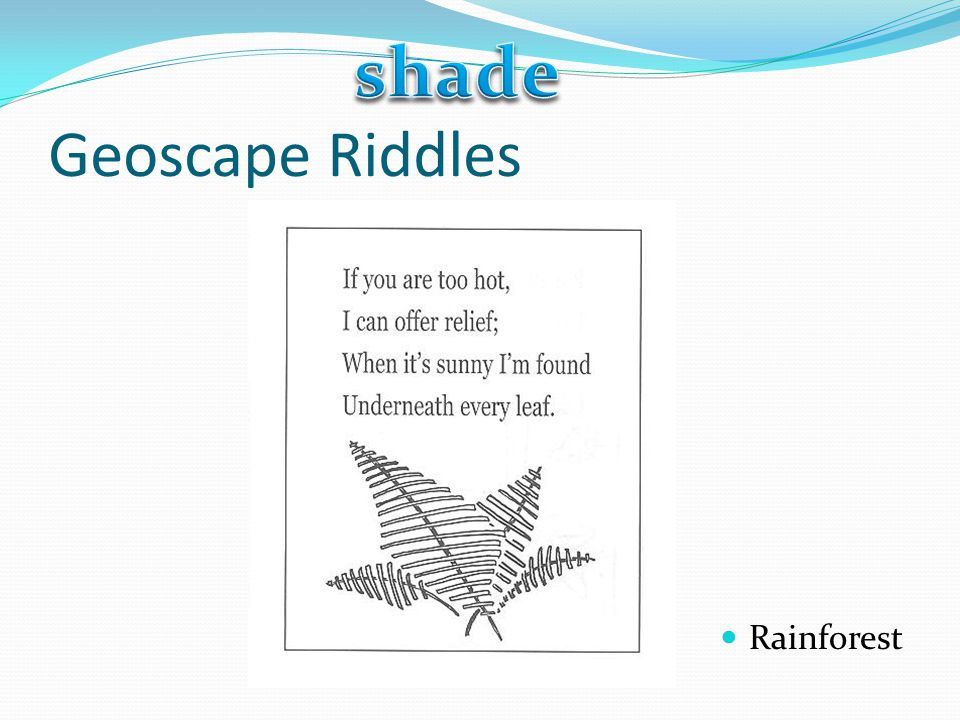 shade Geoscape Riddles Rainforest