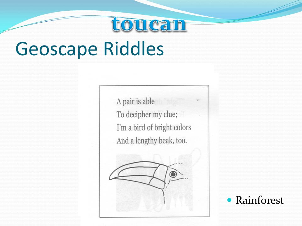 toucan Geoscape Riddles Rainforest