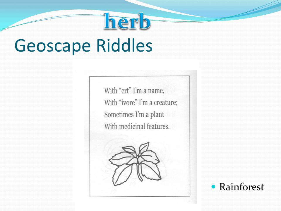 herb Geoscape Riddles Rainforest