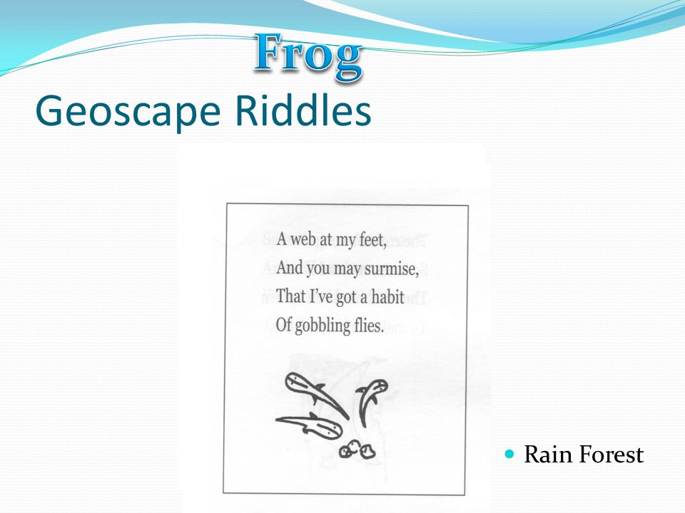 Frog Geoscape Riddles Rain Forest