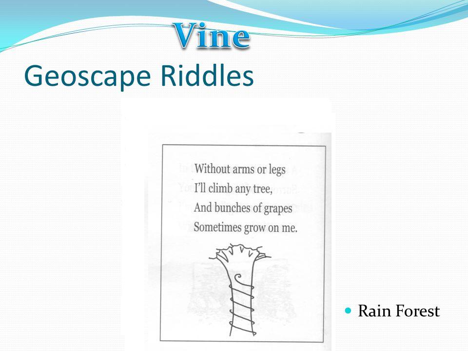 Vine Geoscape Riddles Rain Forest