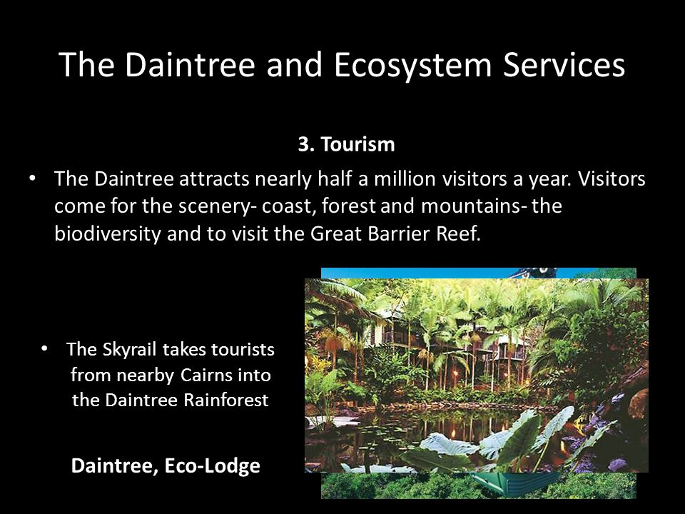 The Daintree and Ecosystem Services