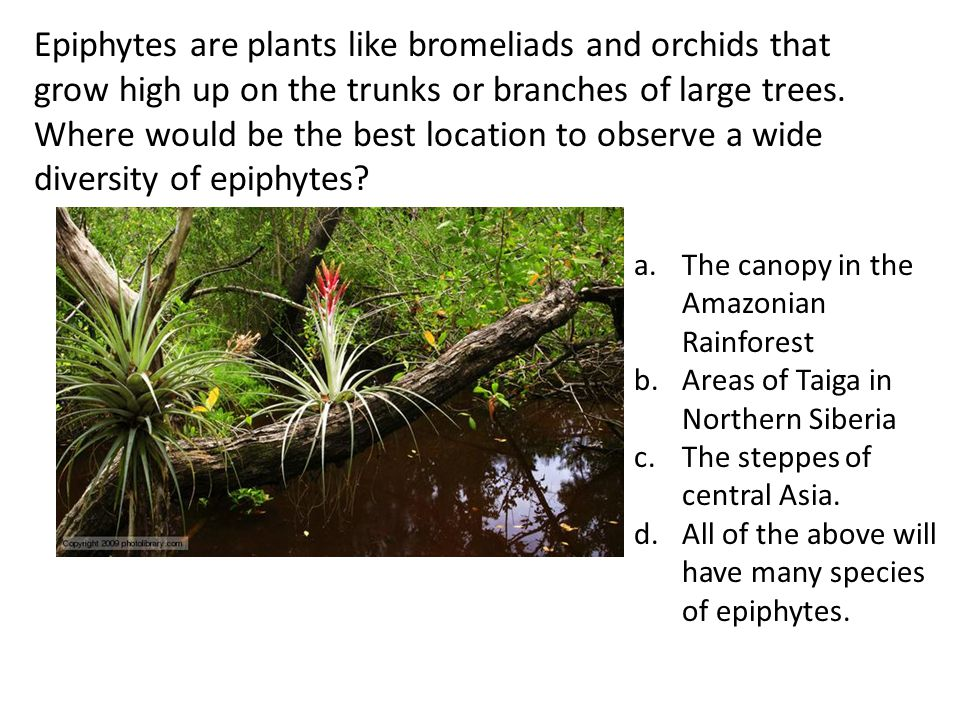 Epiphytes are plants like bromeliads and orchids that grow high up on the trunks or branches of large trees. Where would be the best location to observe a wide diversity of epiphytes