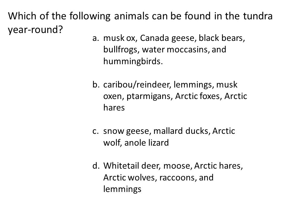 Which of the following animals can be found in the tundra year-round