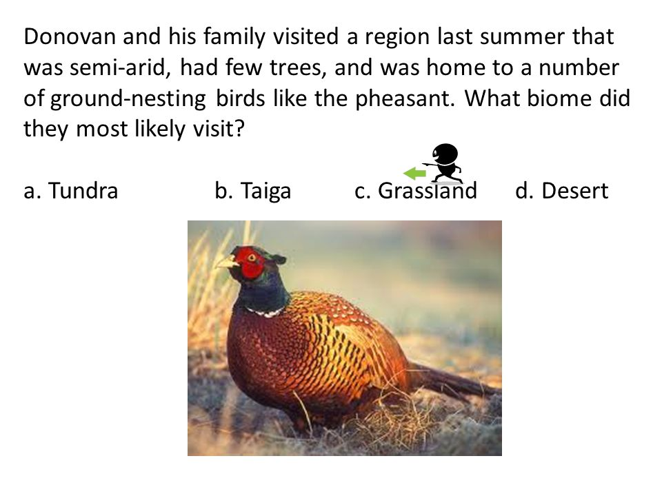 Donovan and his family visited a region last summer that was semi-arid, had few trees, and was home to a number of ground-nesting birds like the pheasant. What biome did they most likely visit