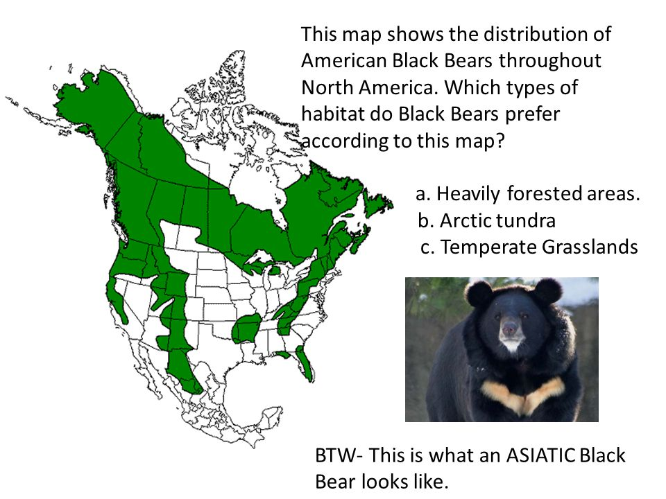 This map shows the distribution of American Black Bears throughout North America. Which types of habitat do Black Bears prefer according to this map