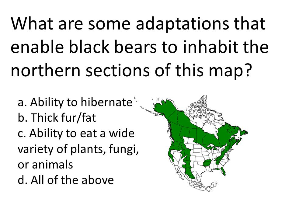 What are some adaptations that enable black bears to inhabit the northern sections of this map