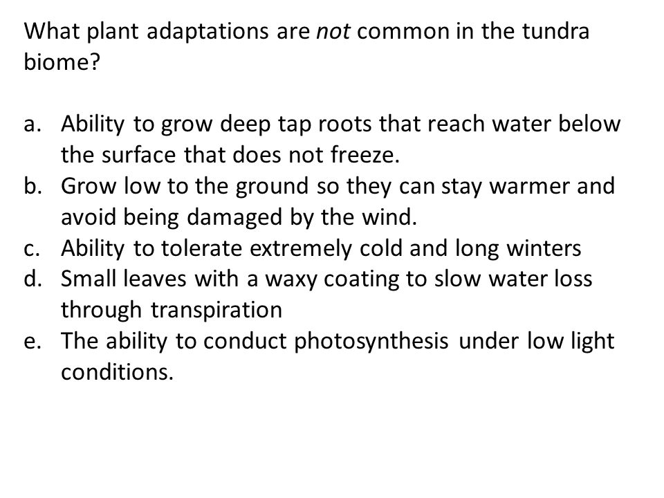 What plant adaptations are not common in the tundra biome