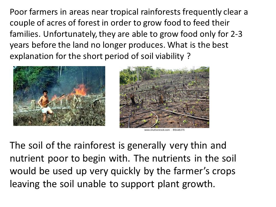 Poor farmers in areas near tropical rainforests frequently clear a couple of acres of forest in order to grow food to feed their families. Unfortunately, they are able to grow food only for 2-3 years before the land no longer produces. What is the best explanation for the short period of soil viability