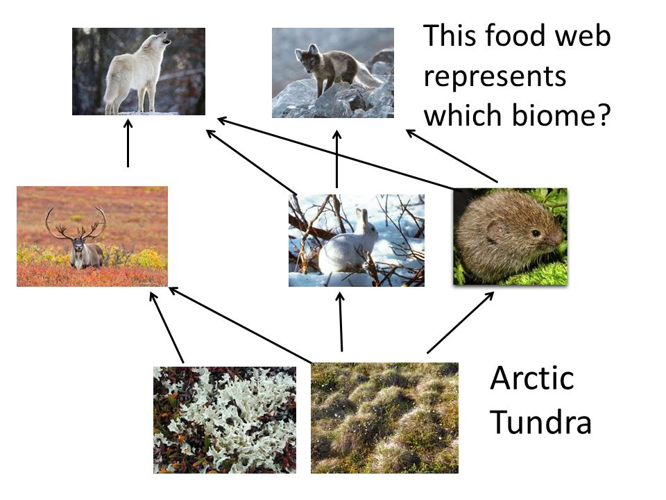 This food web represents which biome