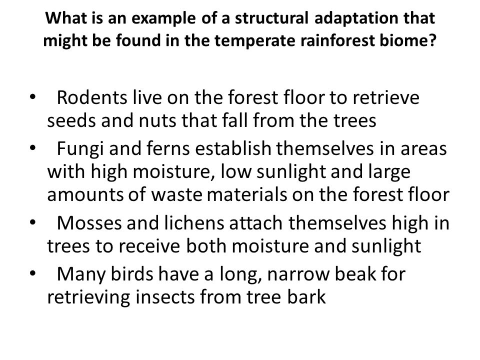 What is an example of a structural adaptation that might be found in the temperate rainforest biome