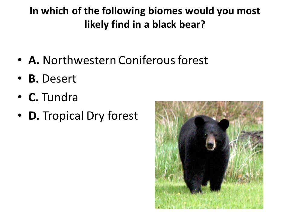 A. Northwestern Coniferous forest B. Desert C. Tundra