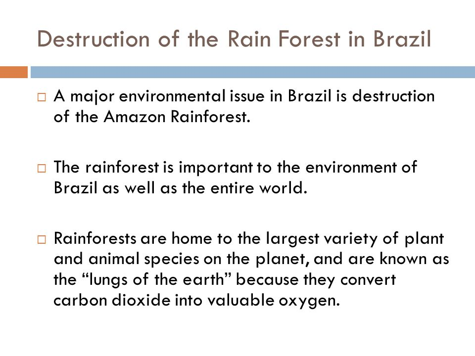 "the issue of mass destruction of rainforests the lungs of the world Rainforests cover 2% of the earth's surface, or 6% of its land mass, yet they   forest logging allows rapid run-off and destroys the ability of the soil to absorb  water  as the ""lungs of the world"" because of its vast capacity to produce  oxygen."