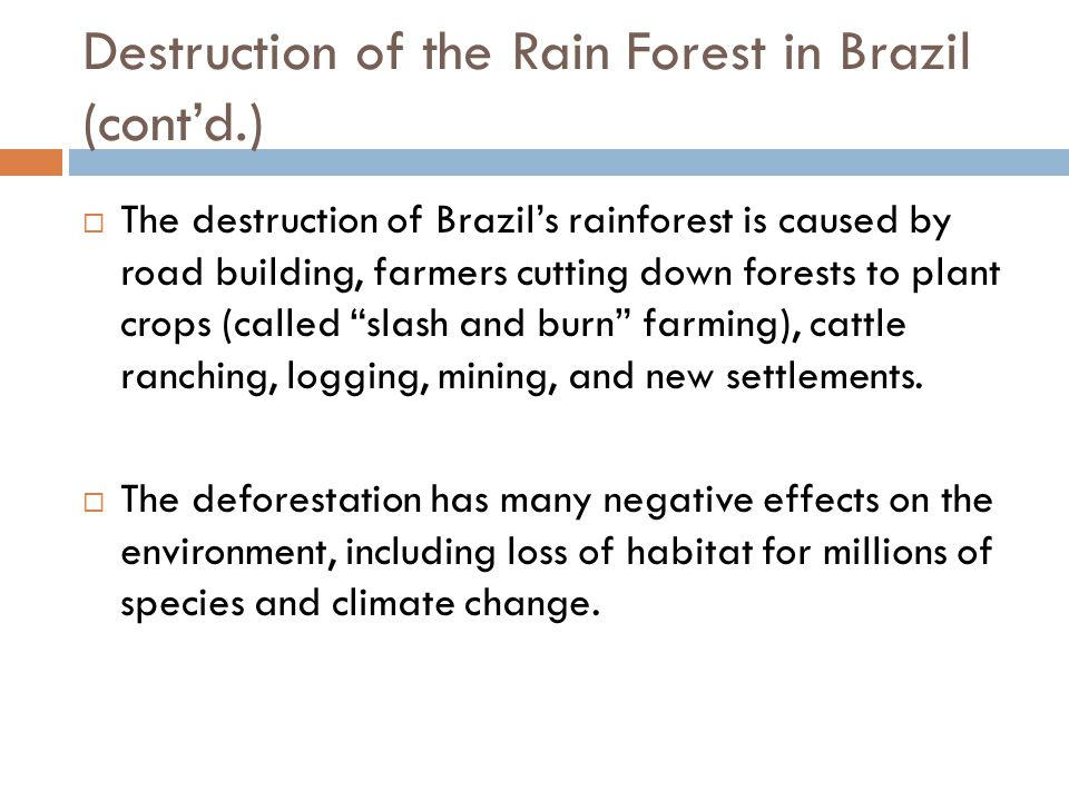 Destruction of the Rain Forest in Brazil (cont'd.)