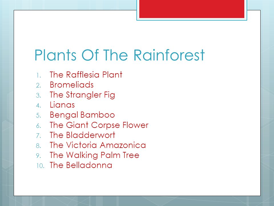 Plants Of The Rainforest