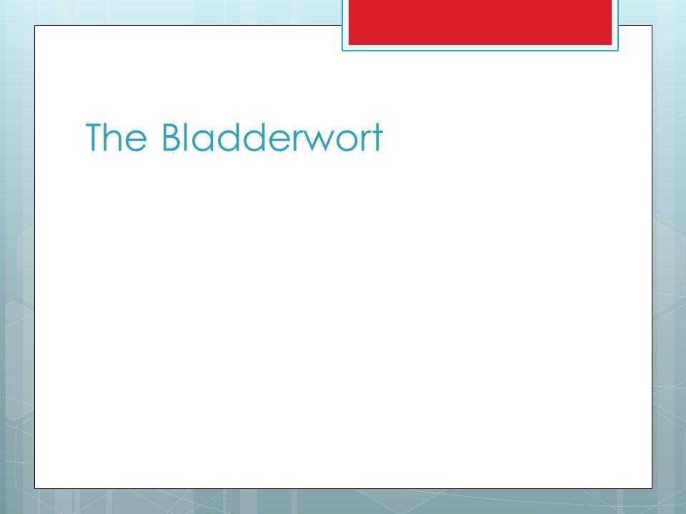 The Bladderwort