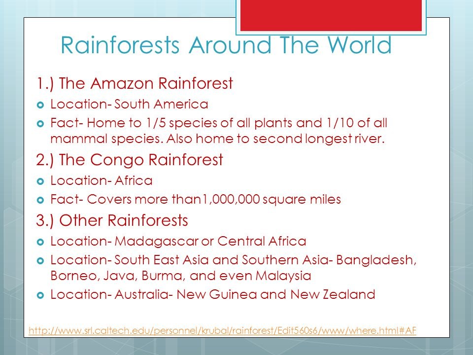 Rainforests Around The World