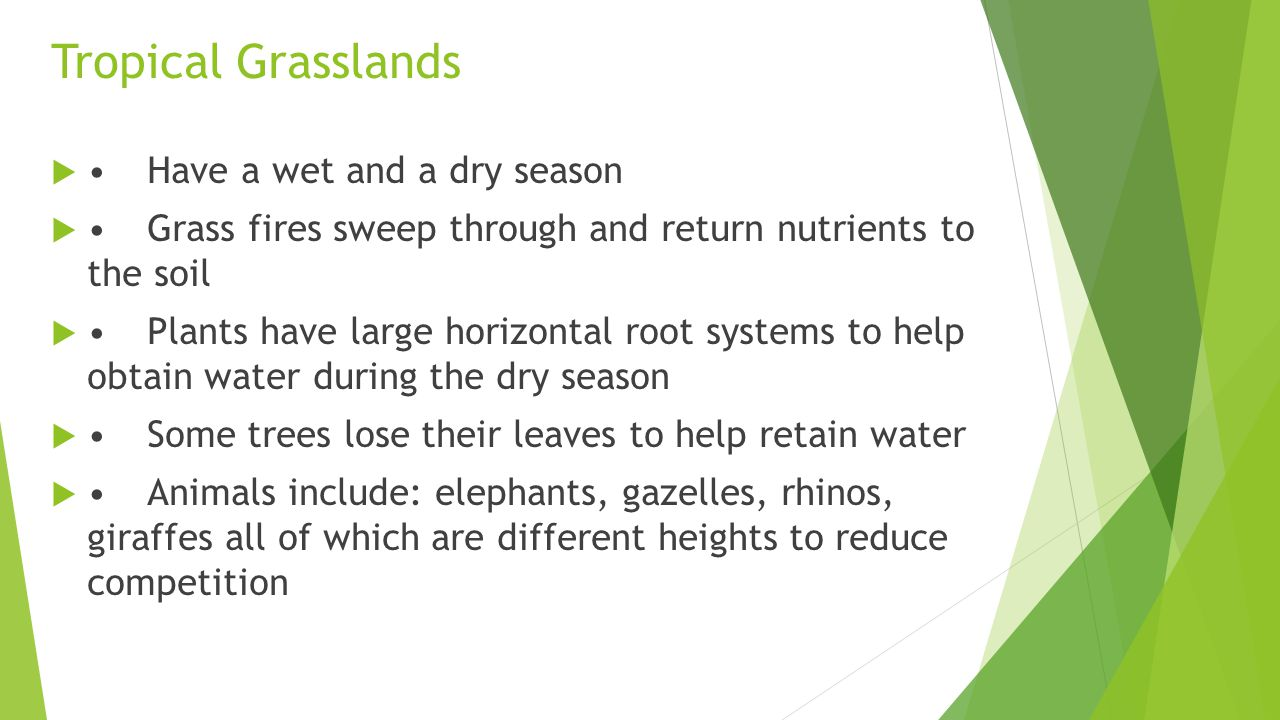Tropical Grasslands • Have a wet and a dry season