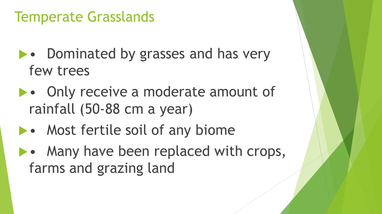 Temperate Grasslands • Dominated by grasses and has very few trees. • Only receive a moderate amount of rainfall (50-88 cm a year)