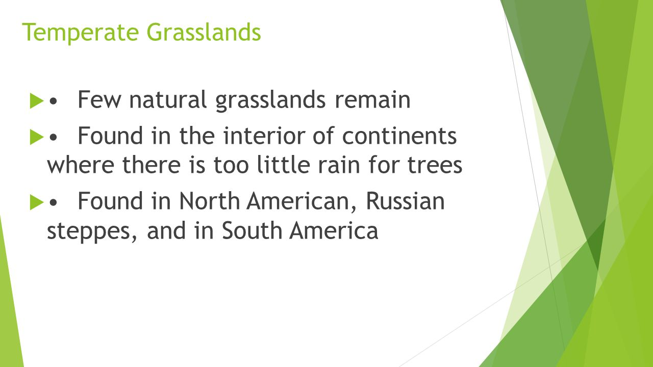 Temperate Grasslands • Few natural grasslands remain. • Found in the interior of continents where there is too little rain for trees.