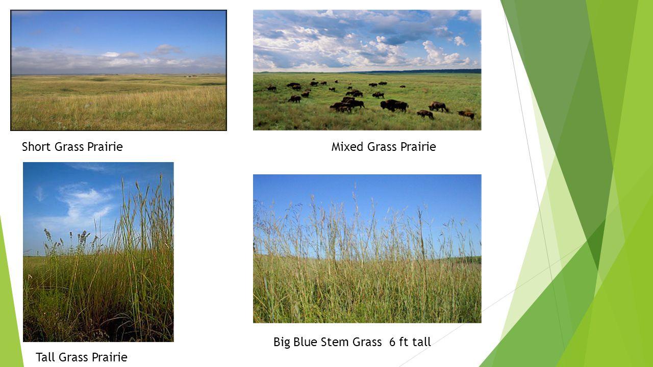 Short Grass Prairie Mixed Grass Prairie
