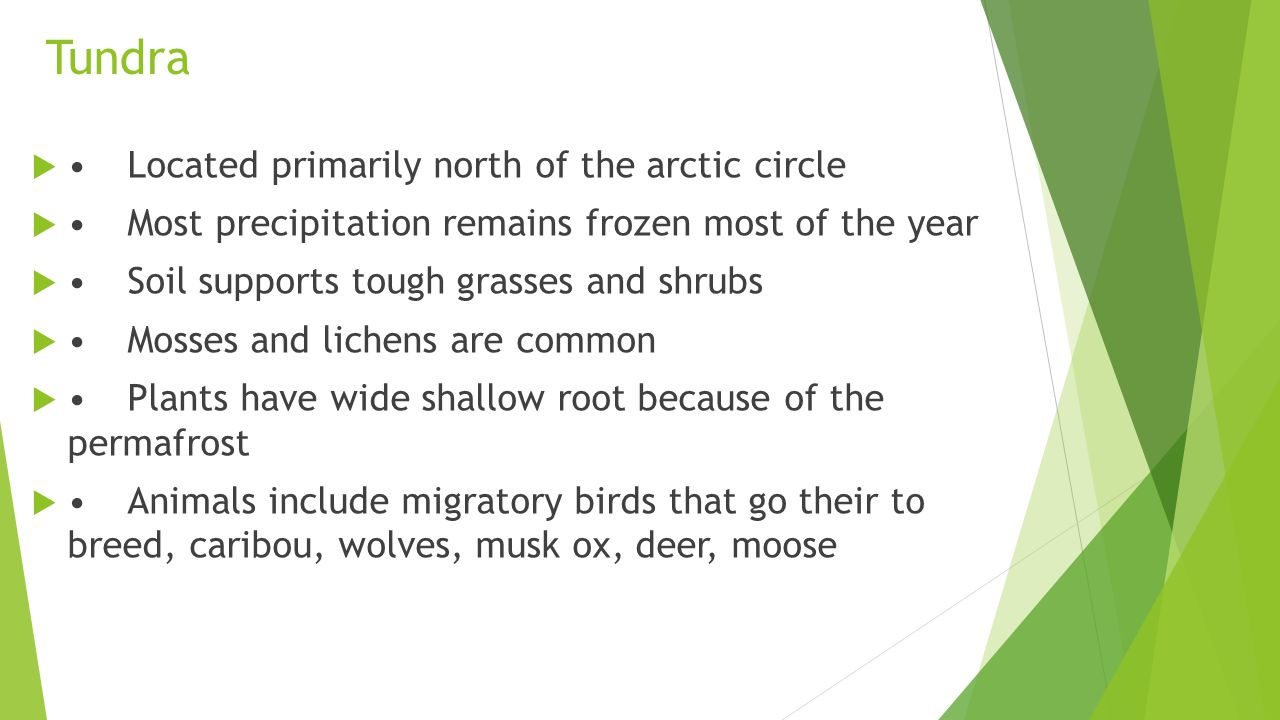 Tundra • Located primarily north of the arctic circle
