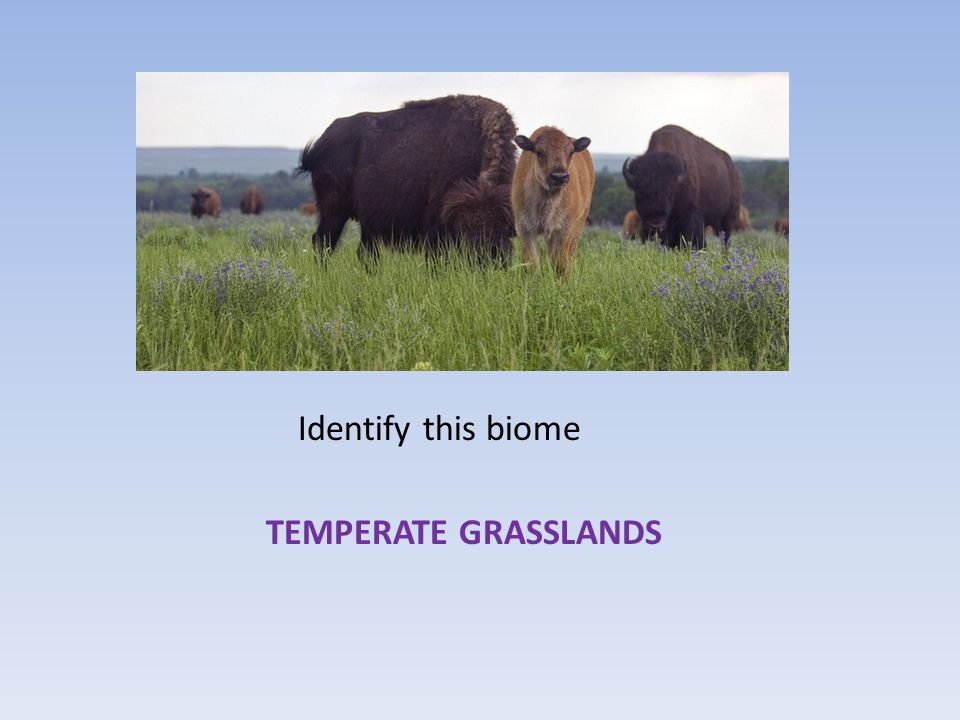 Identify this biome TEMPERATE GRASSLANDS