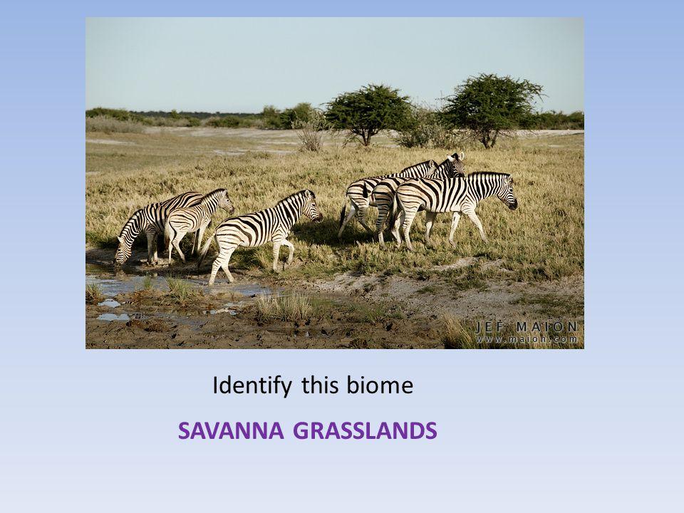 Identify this biome SAVANNA GRASSLANDS