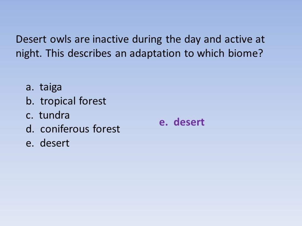 Desert owls are inactive during the day and active at night