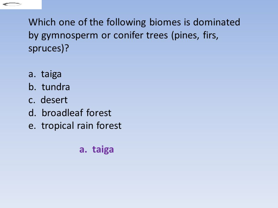 Which one of the following biomes is dominated by gymnosperm or conifer trees (pines, firs, spruces)