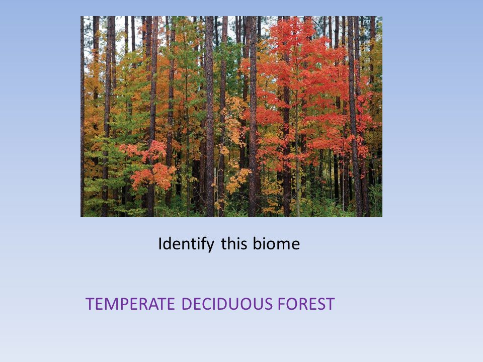 Identify this biome TEMPERATE DECIDUOUS FOREST
