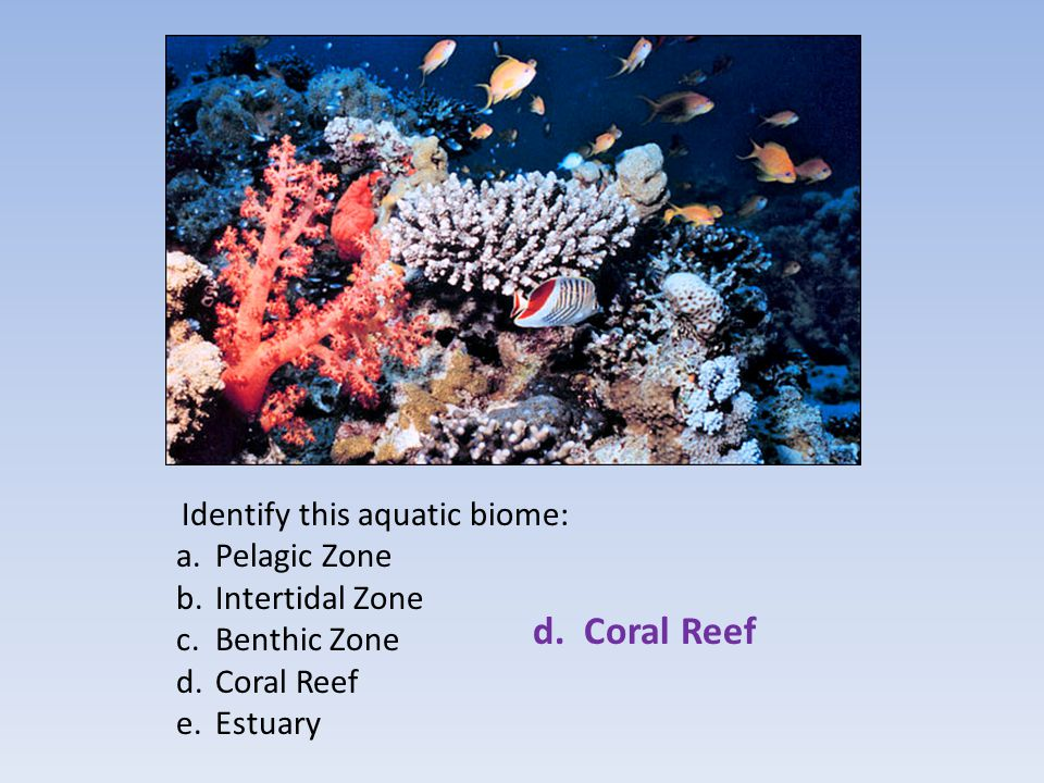 d. Coral Reef Pelagic Zone Intertidal Zone Benthic Zone Coral Reef