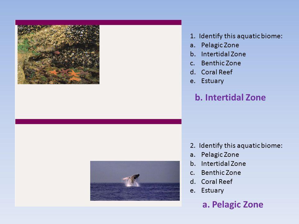 b. Intertidal Zone a. Pelagic Zone 1. Identify this aquatic biome: