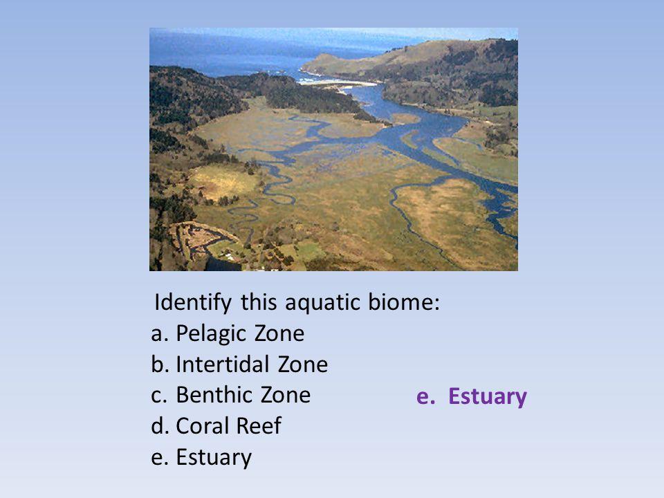 Pelagic Zone Intertidal Zone Benthic Zone Coral Reef Estuary