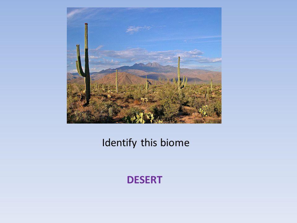 Identify this biome DESERT