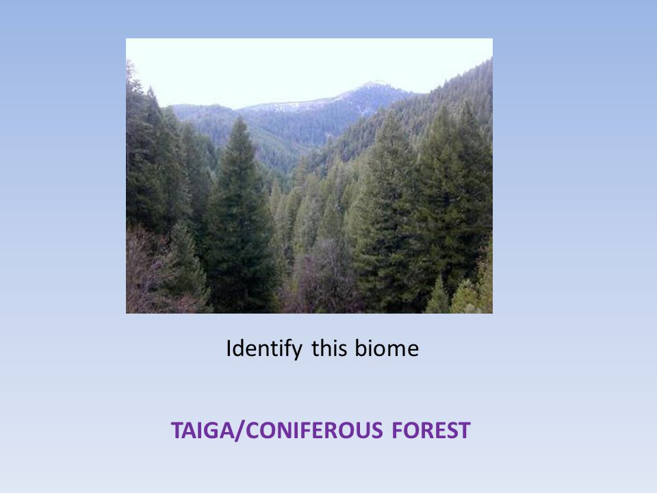 Identify this biome TAIGA/CONIFEROUS FOREST