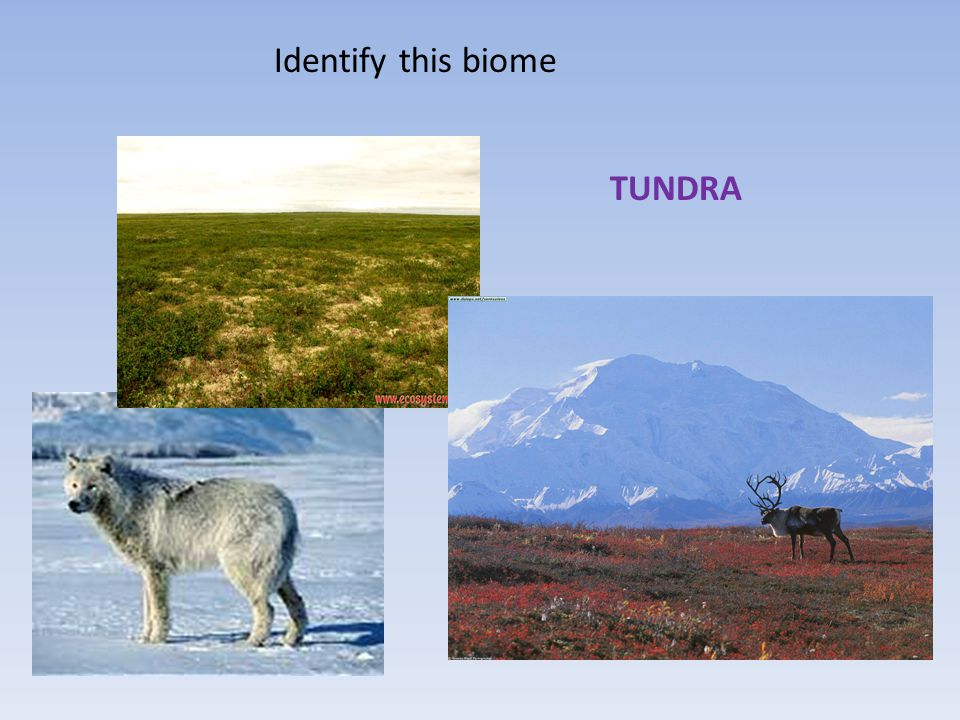 Identify this biome TUNDRA