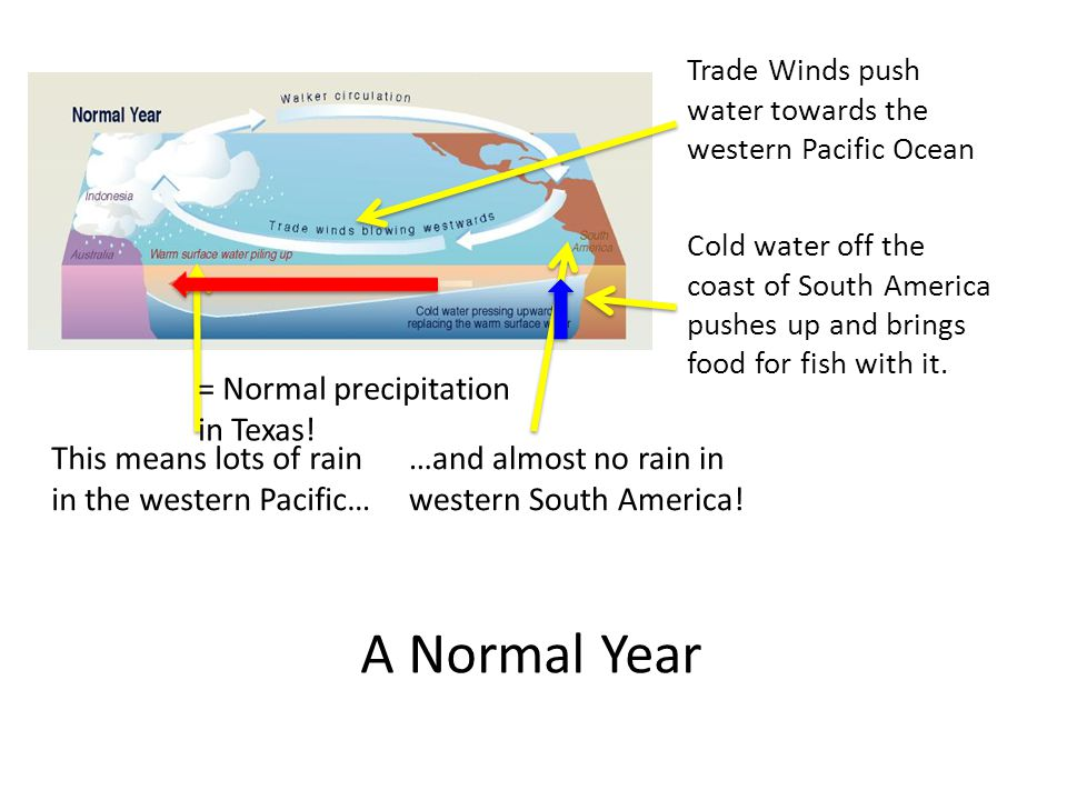 Trade Winds push water towards the western Pacific Ocean