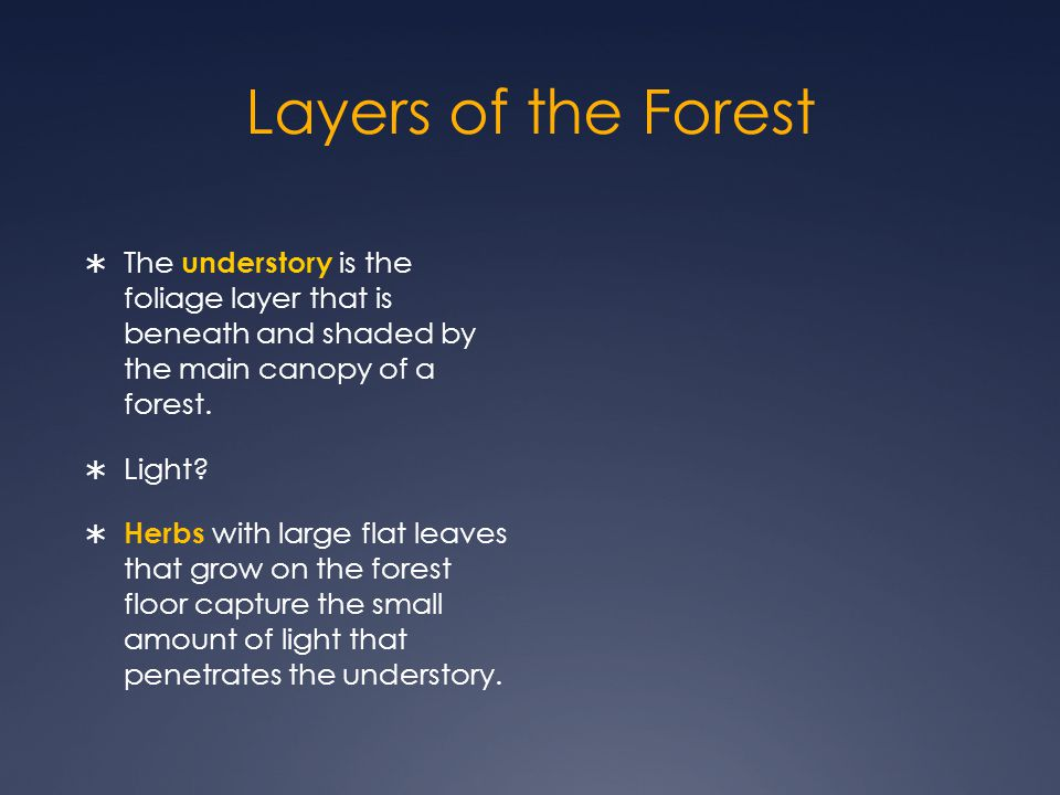 Layers of the Forest The understory is the foliage layer that is beneath and shaded by the main canopy of a forest.