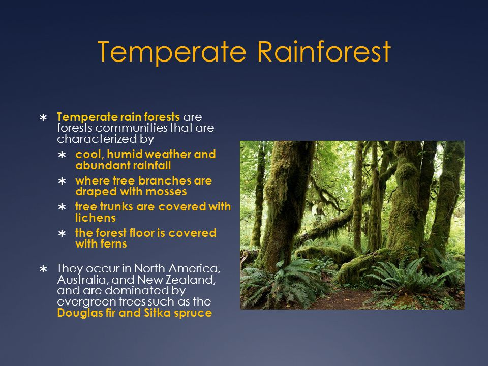 Temperate Rainforest Temperate rain forests are forests communities that are characterized by. cool, humid weather and abundant rainfall.