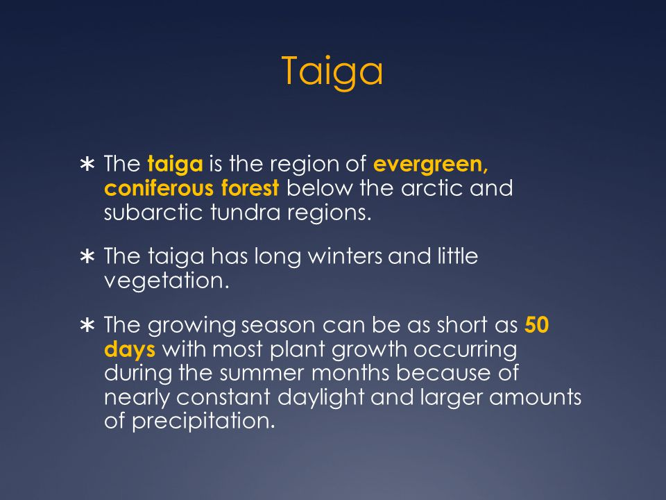 Taiga The taiga is the region of evergreen, coniferous forest below the arctic and subarctic tundra regions.