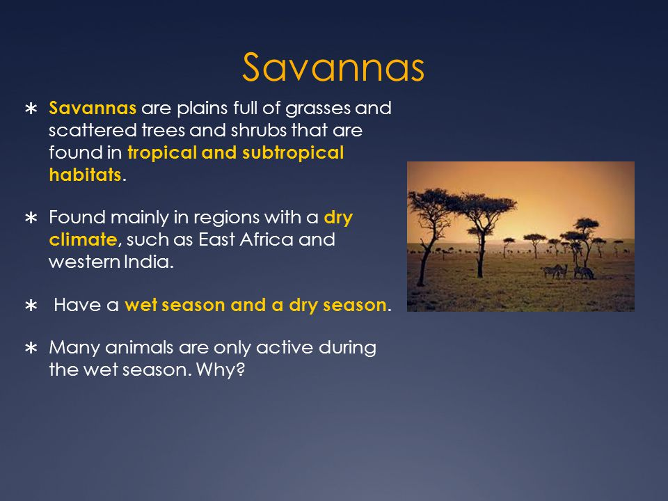 Savannas Savannas are plains full of grasses and scattered trees and shrubs that are found in tropical and subtropical habitats.