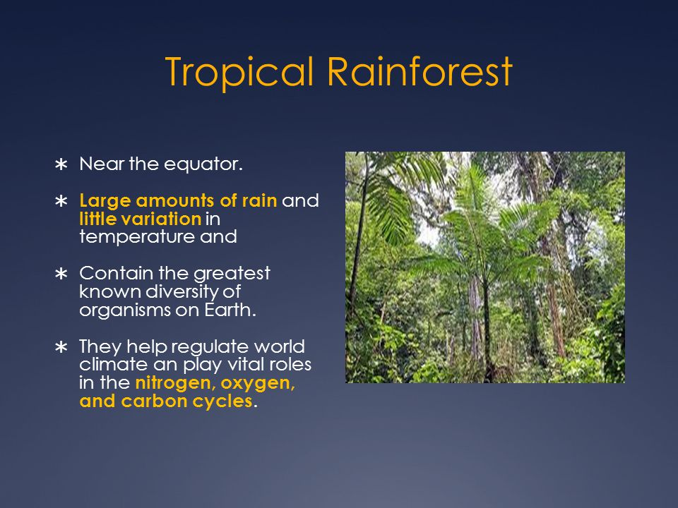 Tropical Rainforest Near the equator.