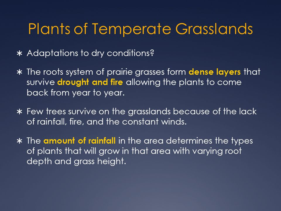 Plants of Temperate Grasslands