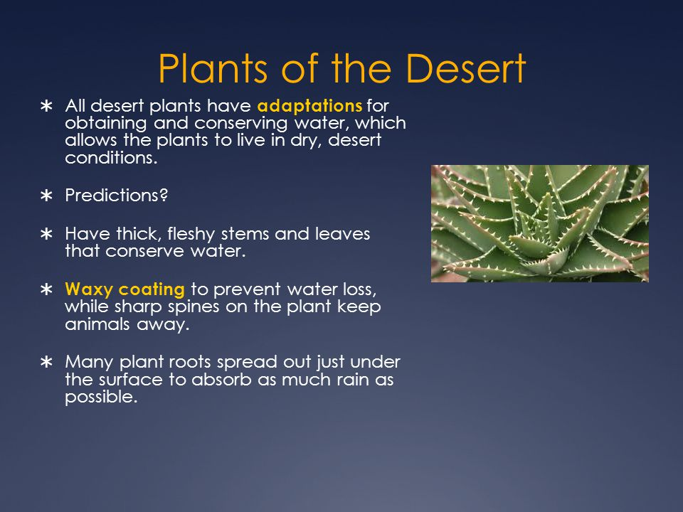 Plants of the Desert